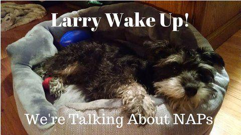 rsz_larry-wake-up